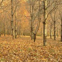 پاییز…پاییز…پاییز…